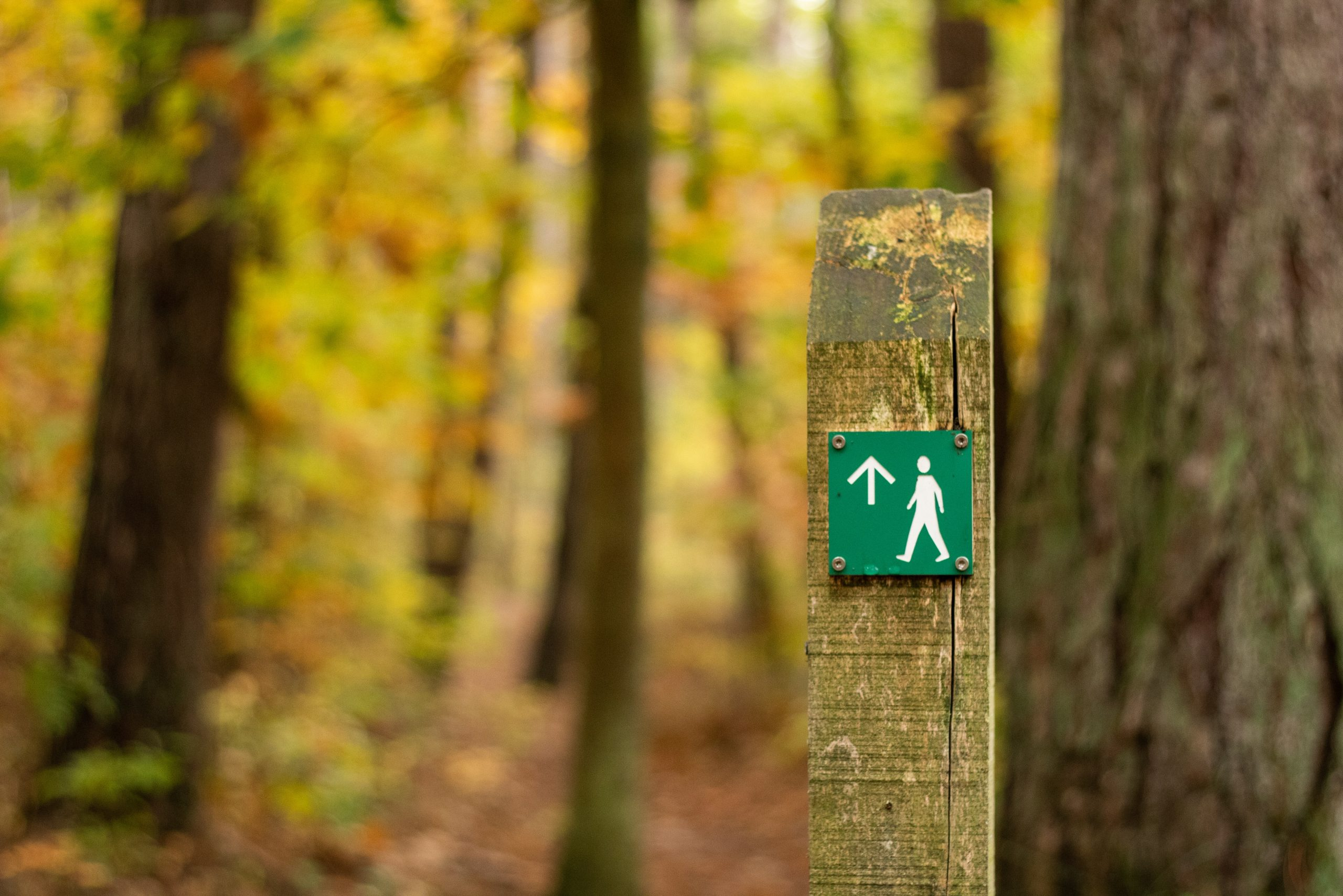 A wooden post with a small sign on it, a white stickman on green, indicating a footpath. The signpost is in an autumnal forest.